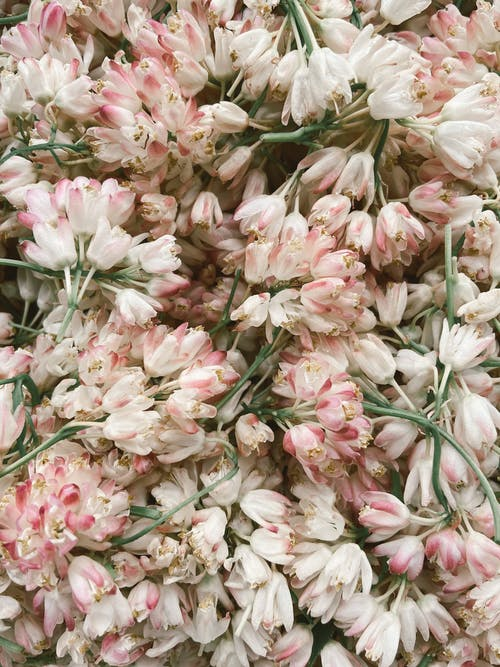 Delicate white and pink flowers heaped together