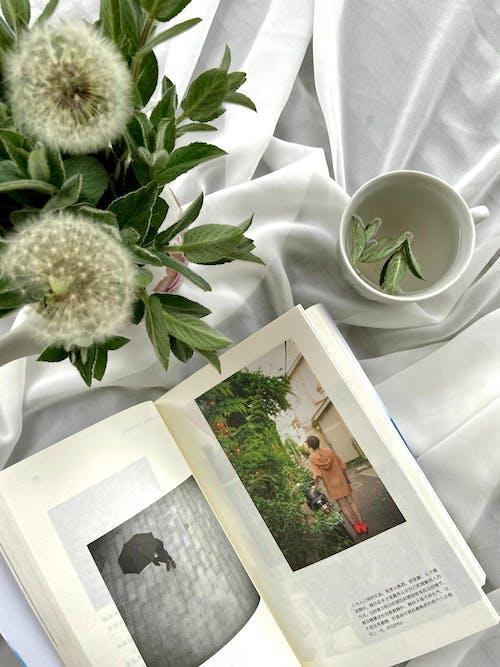 打開書在蒲公英花附近的白布上