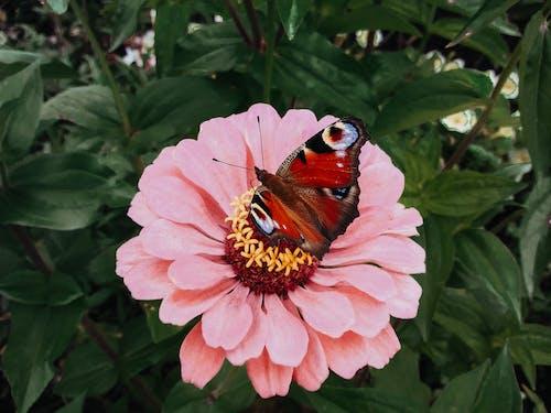 Butterfly on pink flower near plants