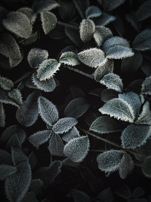 Green and Black Leaves Plant