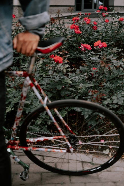 Red and Black Bicycle Beside Red Flowers