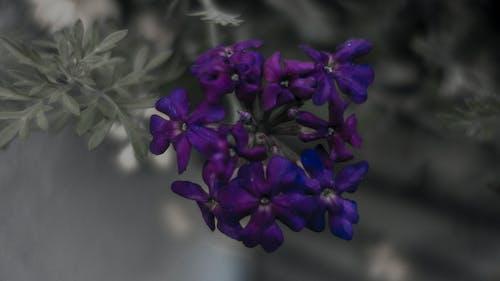 Foto d'estoc gratuïta de color pass, flor, profunditat de camp