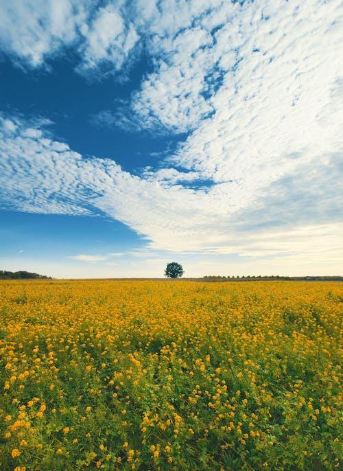 Ingyenes stockfotó felhő, fényes, fű témában