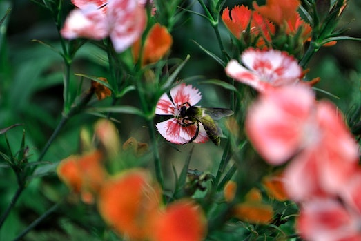Free stock photo of flowers, garden, petals, bee