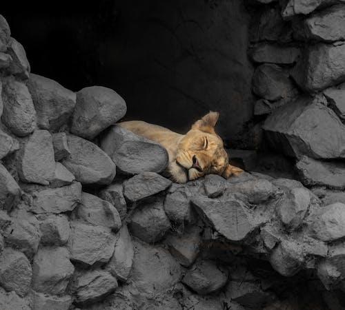 Free stock photo of african wildlife, animals, animals in the wild