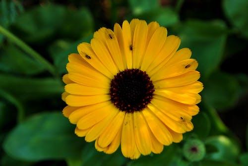 Základová fotografie zdarma na téma květiny, zahrada, žluté květiny