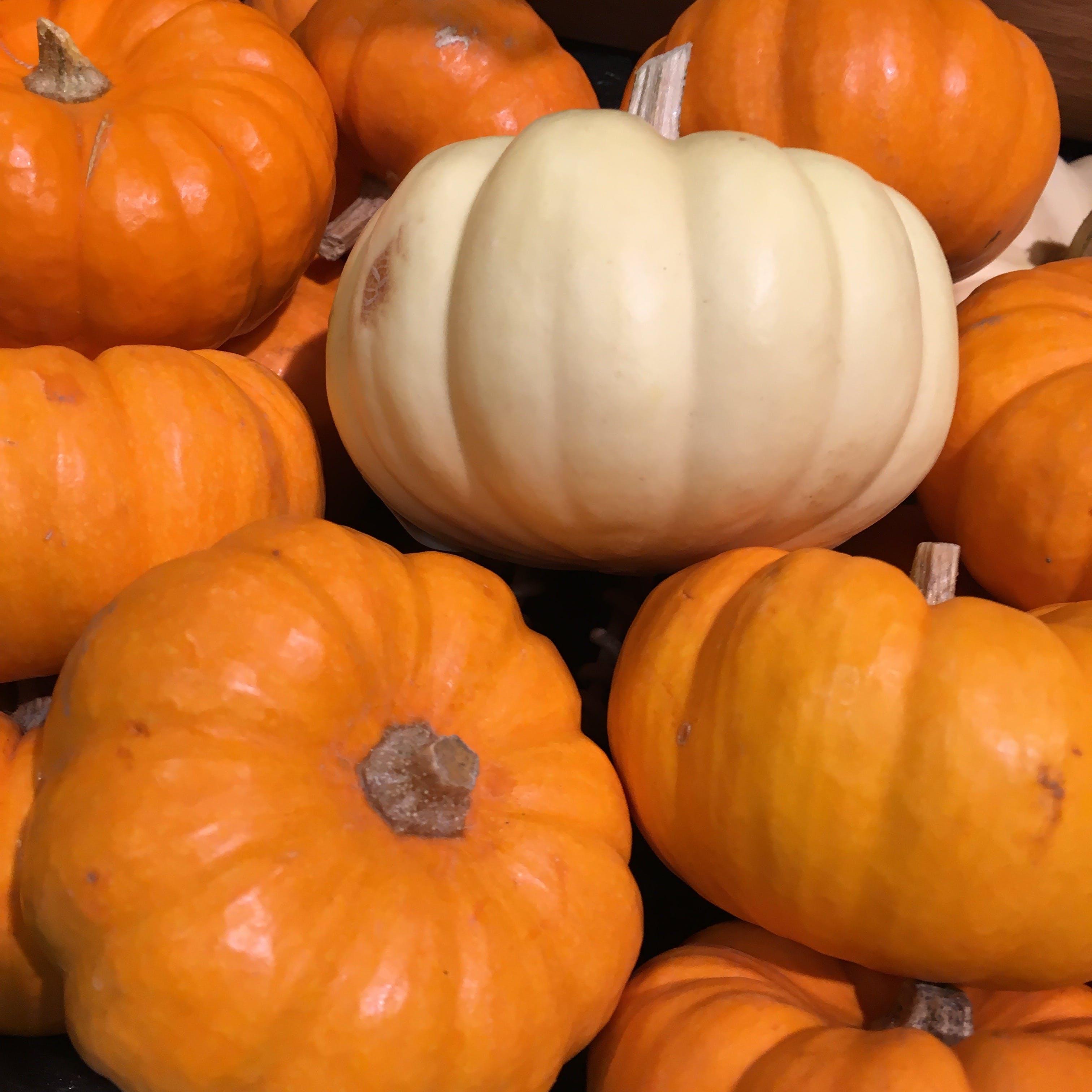 Free stock photo of autumn, autumn colours, autumn decoration, fall