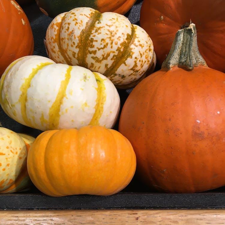 abóbora, colheita, decoração de outono