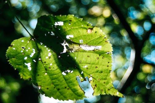 一縷陽光, 天性, 森林, 模糊 的 免费素材照片