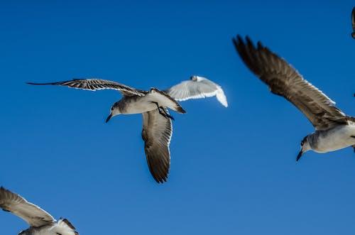 Immagine gratuita di ali, animale, cielo azzurro