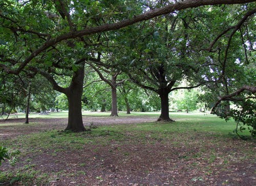 Free stock photo of city park, green, melbourne