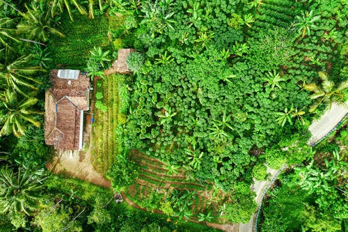 Verdant jungle and residential house in countryside