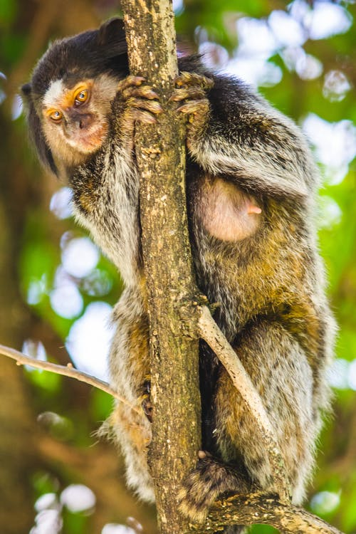 Free stock photo of animals, ape, beauty of nature