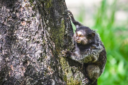 Black and Brown Monkey on Brown Tree Trunk