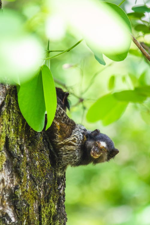 Black and Brown Squirrel on Tree Branch