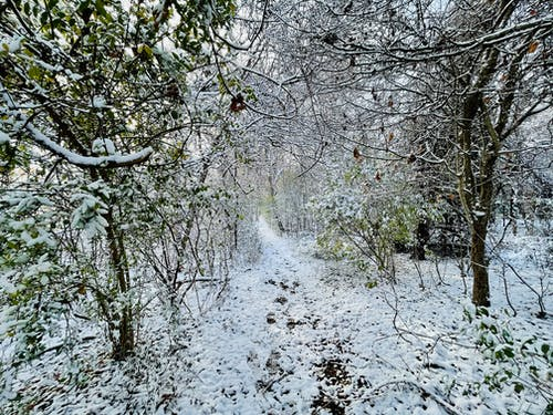 Free stock photo of snow, trees, winter background