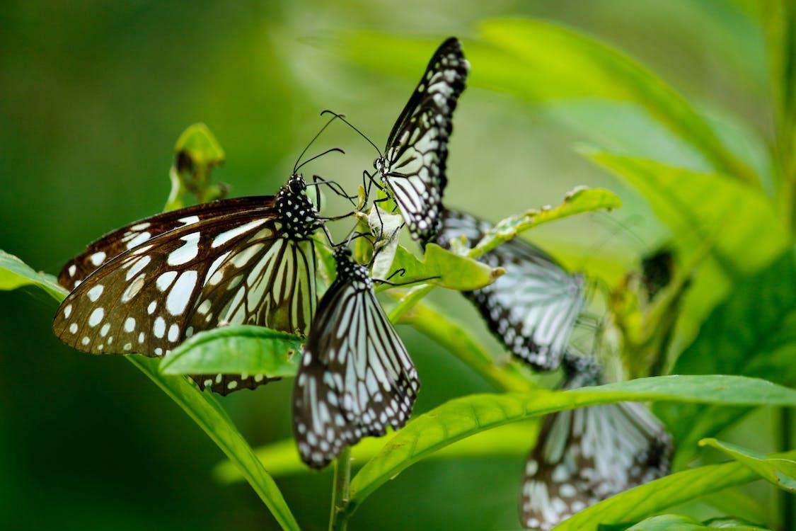 곤충, 나뭇잎, 나비