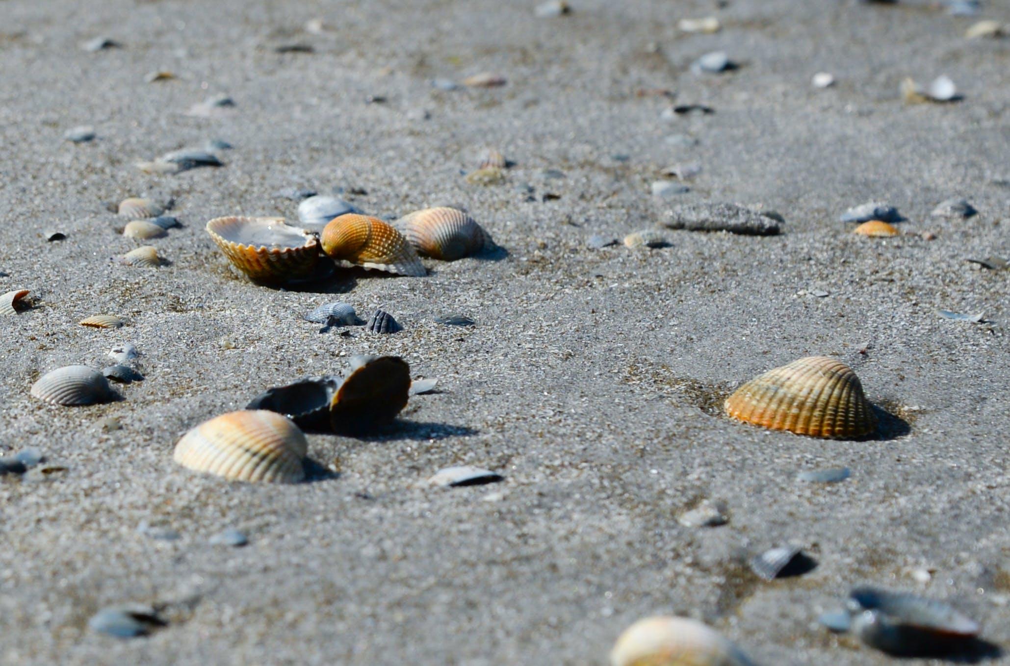 껍데기, 모래, 물, 바다의 무료 스톡 사진