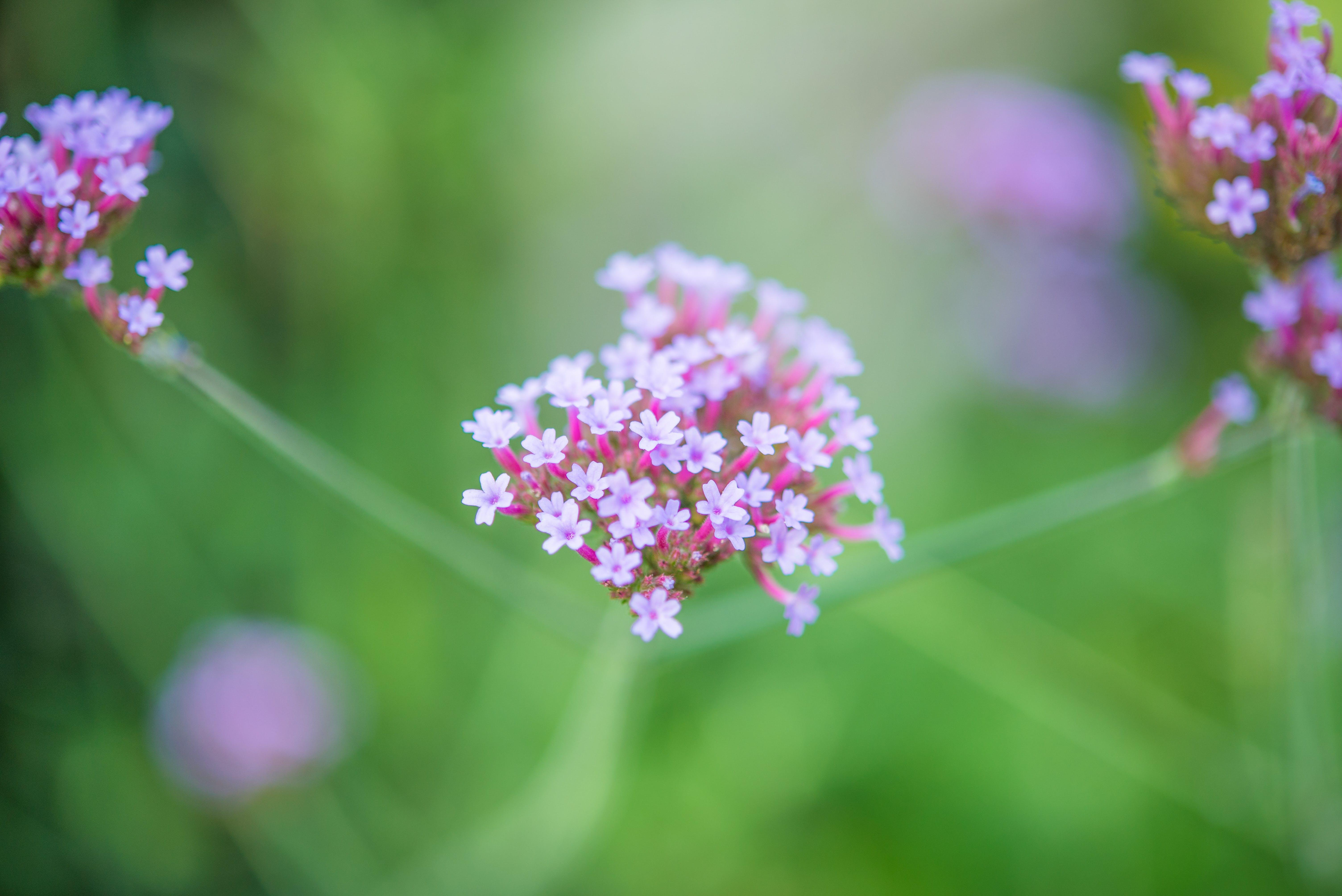 Ilmainen kuvapankkikuva tunnisteilla hauras, kasvi, kasvu, kirkas