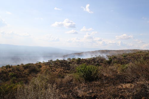 Free stock photo of african bush, african savannah, bush fire