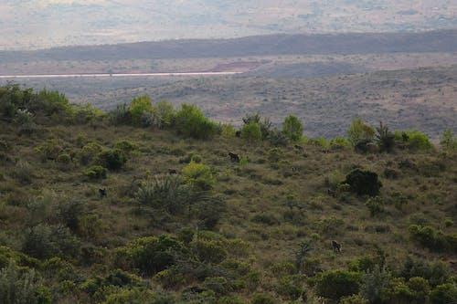 Free stock photo of africa, baboons, escarpment