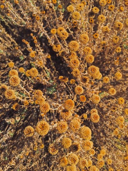 乾花, 夏天, 夏季, 美在自然中 的 免費圖庫相片