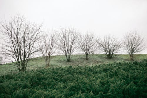Row of leafless trees growing on glade with fresh grass near verdant shrubs under gray cloudy gloomy sky