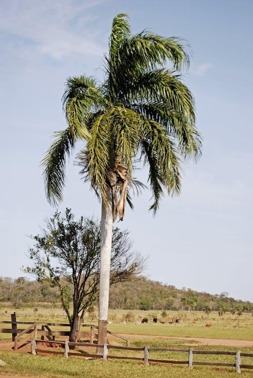 Photos gratuites de arbres, barrière, ciel, clairière