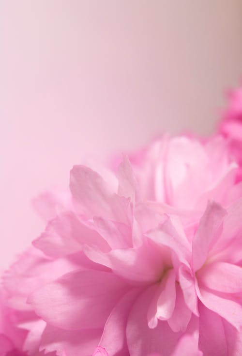 Kostenloses Stock Foto zu blühen, blume, blüte