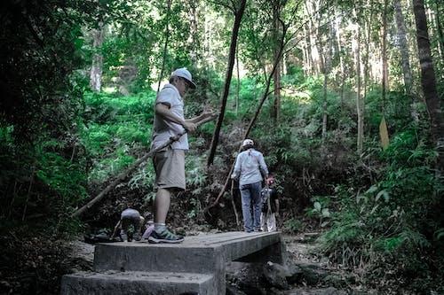 Foto stok gratis hutan hujan, jejak, laki-laki, lingkungan Hidup