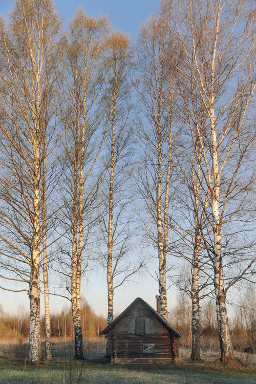 Small wooden construction on meadow with overgrown leafless trees under blue sky in autumn