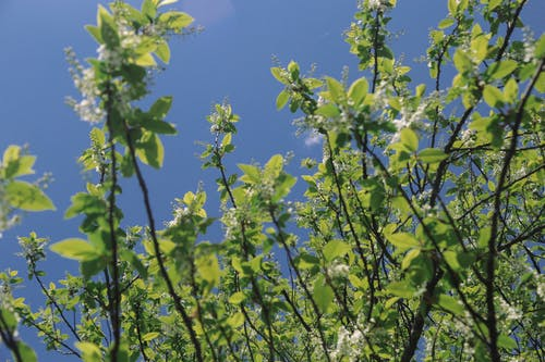 Gratis stockfoto met angiosperms, aroma, biologisch