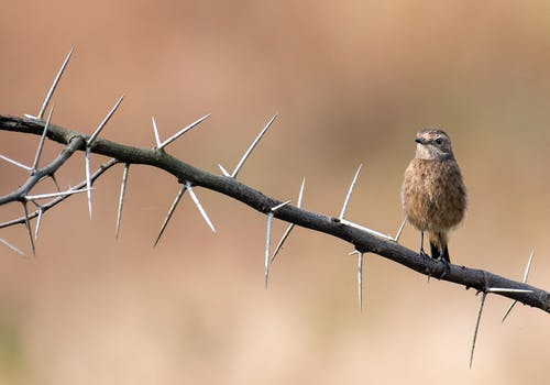 Small stonechat sitting on branch