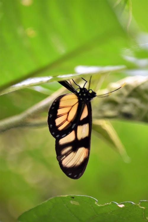 Free stock photo of borboleta, borboleta pousada, butterfly