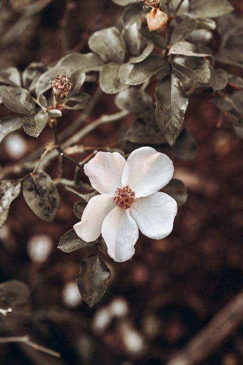 Základová fotografie zdarma na téma barva, bílé květy, flóra, kaktus