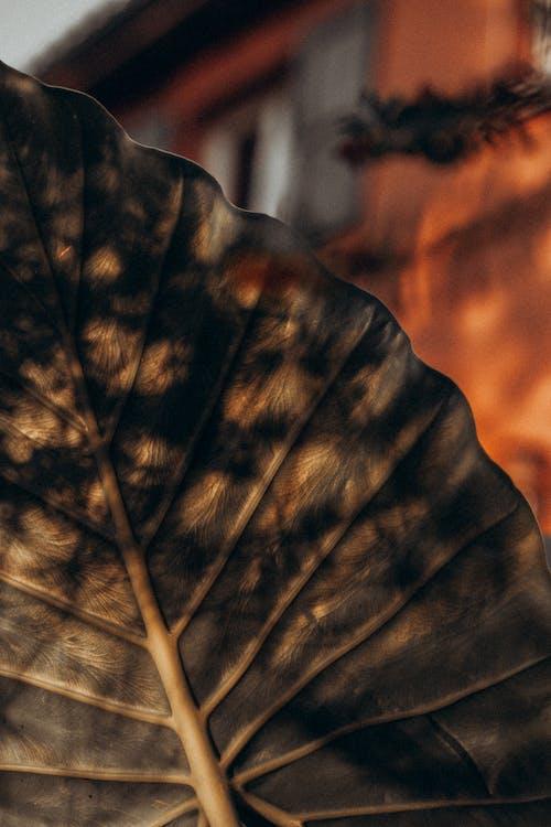 Základová fotografie zdarma na téma abstraktní, barva, design interiéru, dřevo