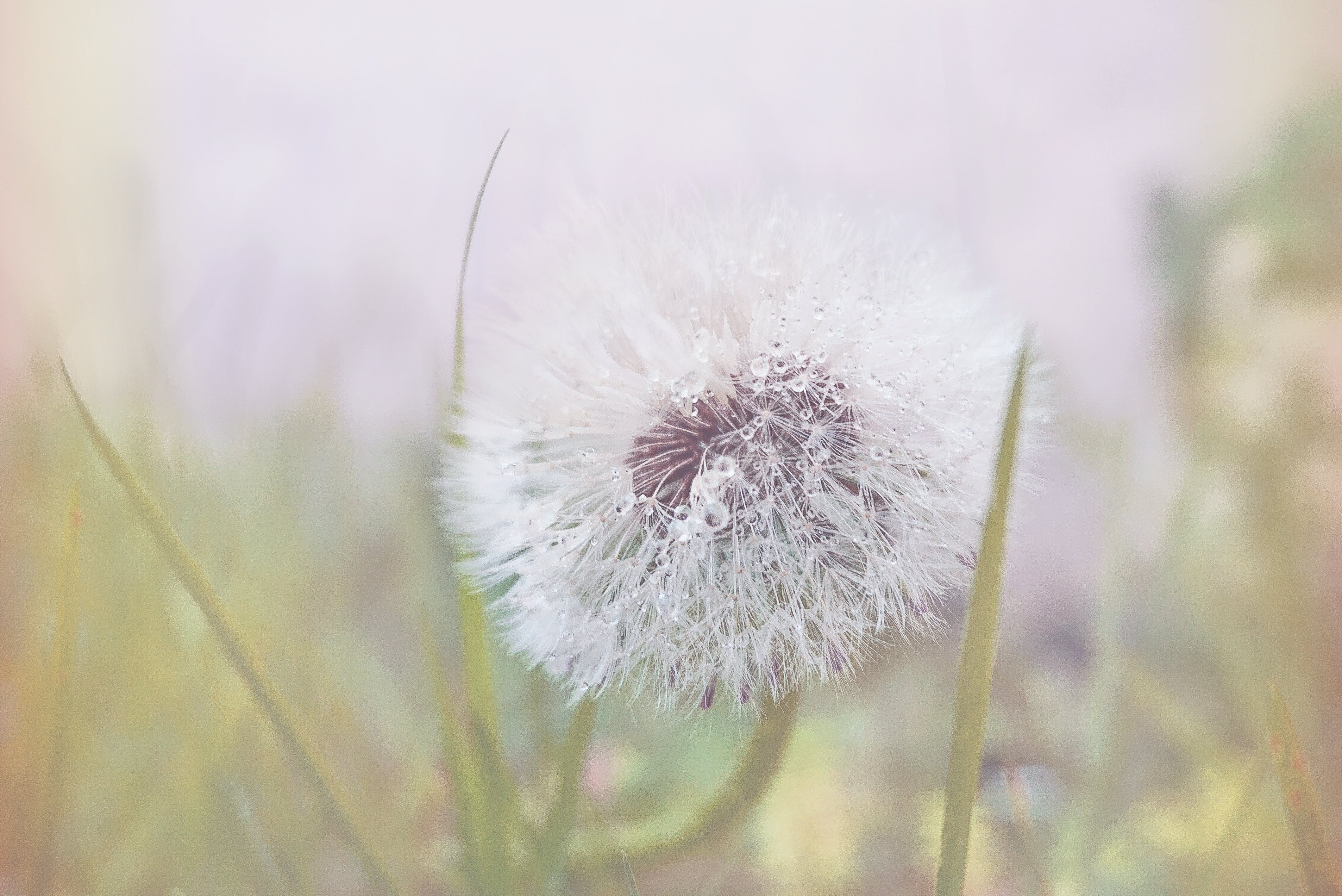 Free stock photo of nature, flowers, grass, plant