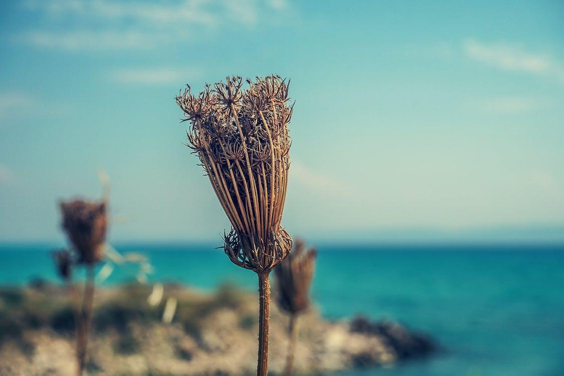 Безкоштовне стокове фото на тему «берег моря, біля моря, вода»
