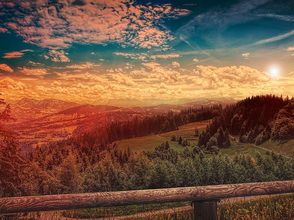 Immagine gratuita di 4k, alberi, boschi