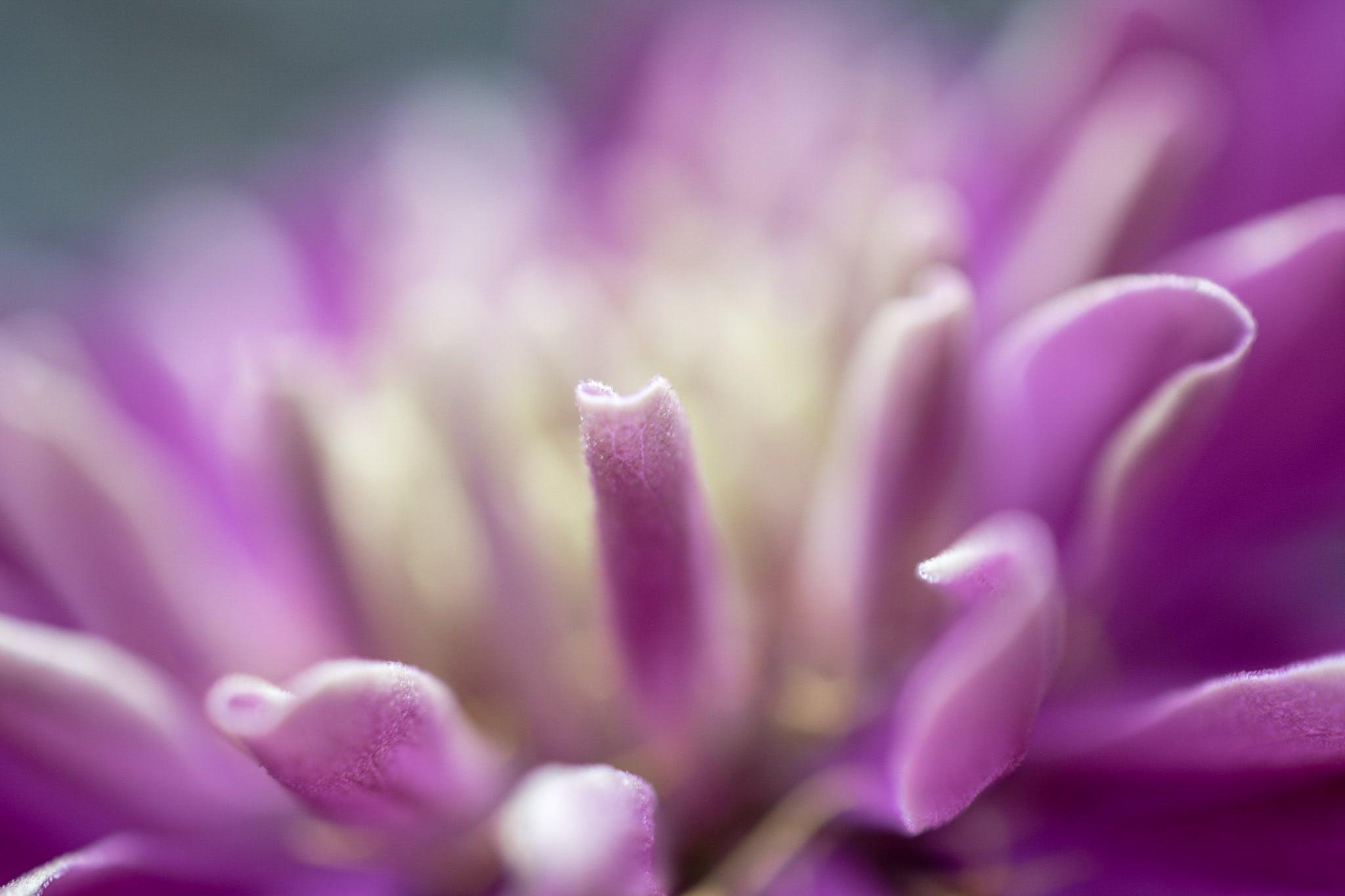 Free stock photo of flower, macro, purple, purple flower
