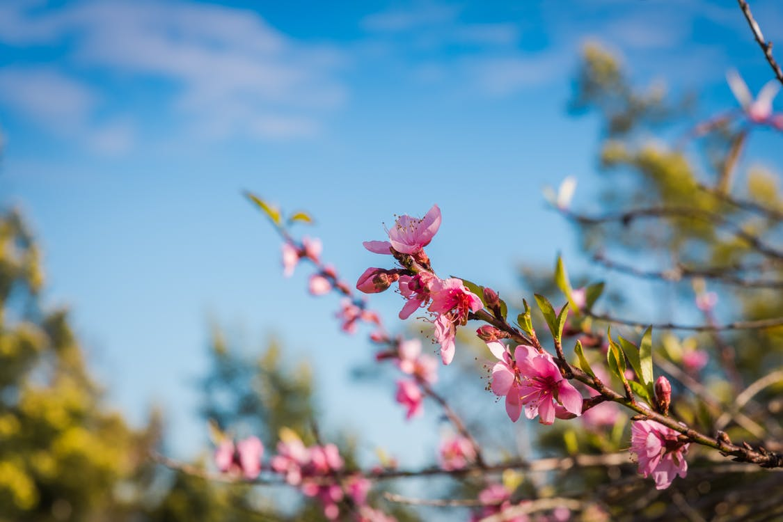 Free stock photo of beautiful flowers, blue sky, macro photography