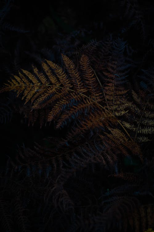 Delicate branches of fern with green leaves