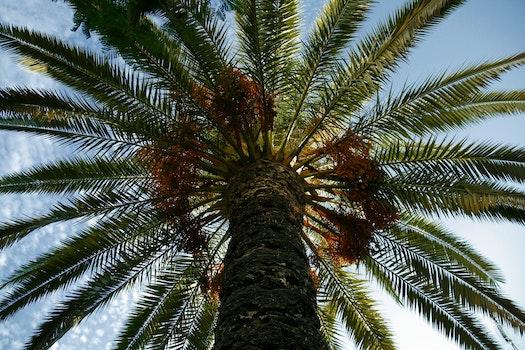 Free stock photo of sunny, sun, palm, palm tree