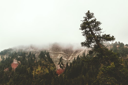 Free stock photo of nature, forest, trees, foggy