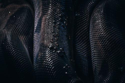 Black and Gray Snake Skin Textile