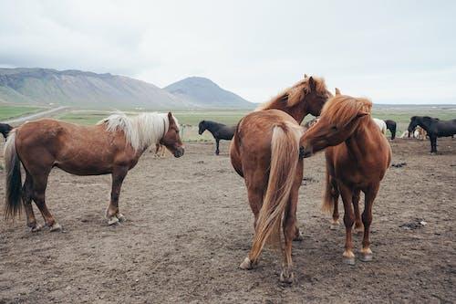 Free stock photo of beauty of nature, horse, horses