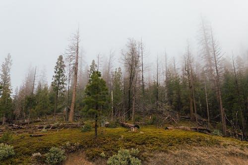 Бесплатное стоковое фото с HD-обои, дерево, деревья, закат