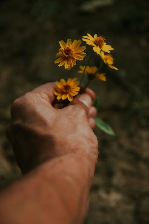 Ảnh lưu trữ miễn phí về ban ngày, bộ phận cơ thể, cánh hoa