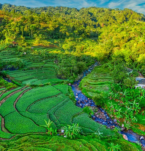 Aerial view of green terraces of agricultural fields with narrow river surrounded by lush tropical rainforest
