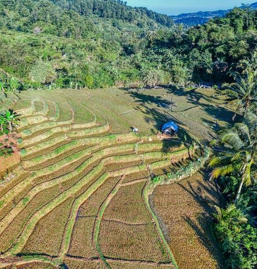 Terrace field among tropical plants in hilly terrain